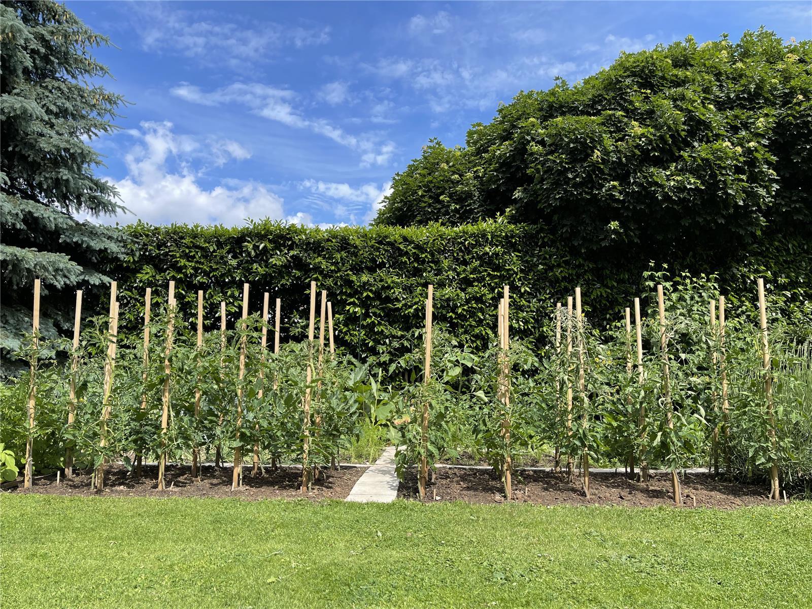 12 Pflanzstäbe, Tomatenstäbe, Rankstäbe aus Robinienholz